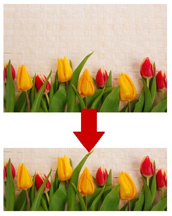 Bildausschnitt aus einem Bild mit Tulpen